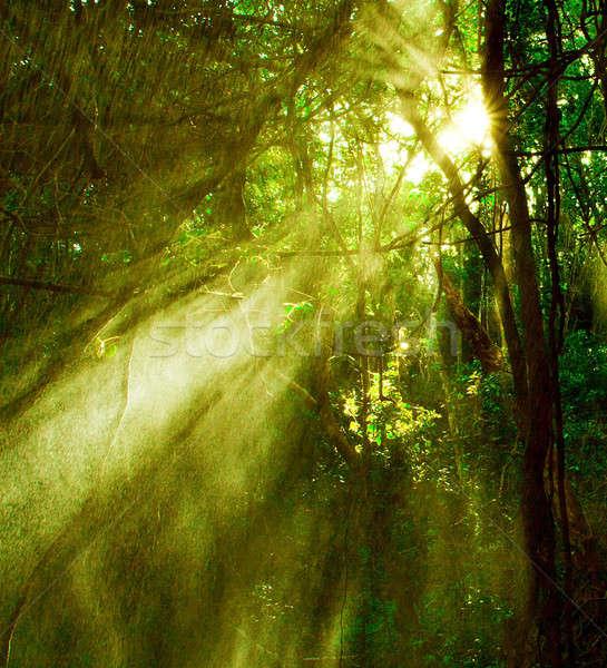 Autunno foresta immagine misty foresta pluviale luminoso Foto d'archivio © Anna_Om