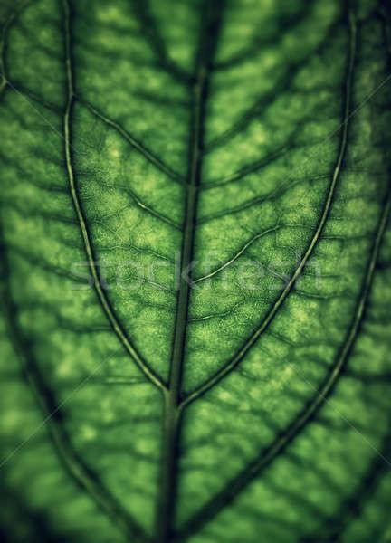 Green leaf background Stock photo © Anna_Om