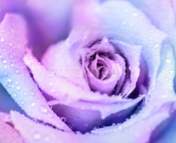 Сток-фото: зима · закрывается · Purple · аннотация · цветочный · нежный