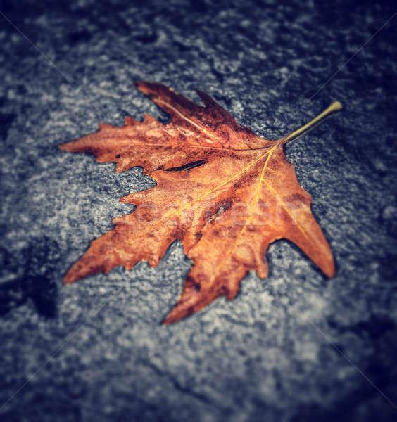Asciugare foglia d'acero umido asfalto abstract naturale Foto d'archivio © Anna_Om