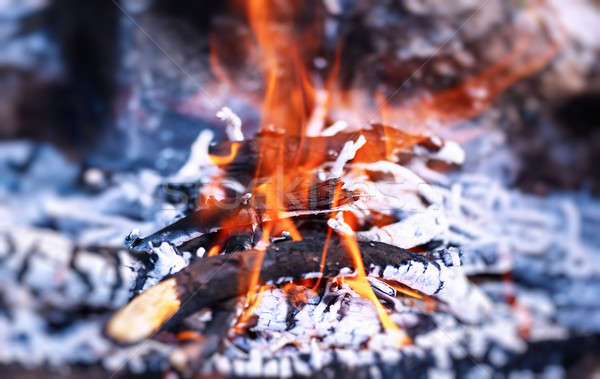 Hoguera hermosa ardor campamento carbón barbacoa Foto stock © Anna_Om