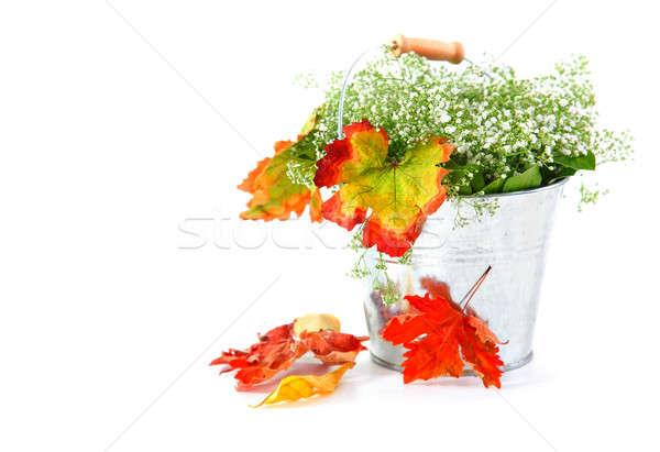 Stok fotoğraf: Sonbahar · yaprakları · pot · yalıtılmış · beyaz · bahar · doğa