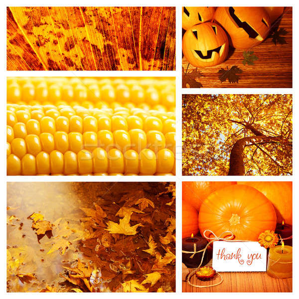 Stock photo: Autumn season collage