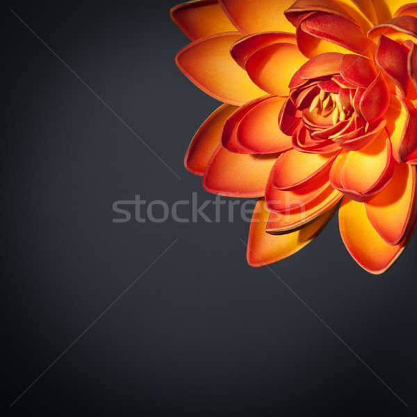 Beautiful orange lotus flower Stock photo © Anna_Om