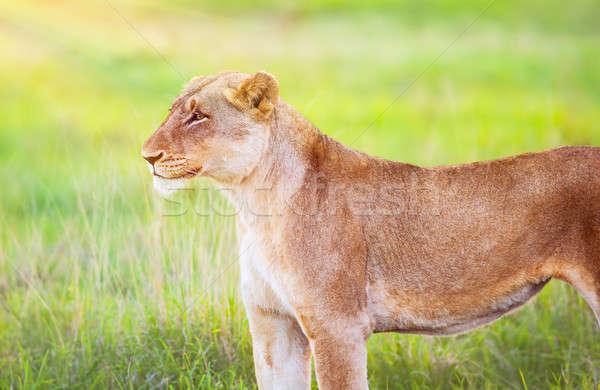 Foto stock: Sudáfrica · retrato · hermosa · animales · frescos