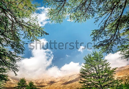 Cedars of Lebanon Stock photo © Anna_Om