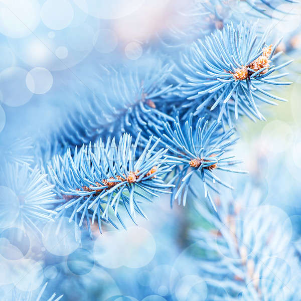 Frozen fir tree background Stock photo © Anna_Om
