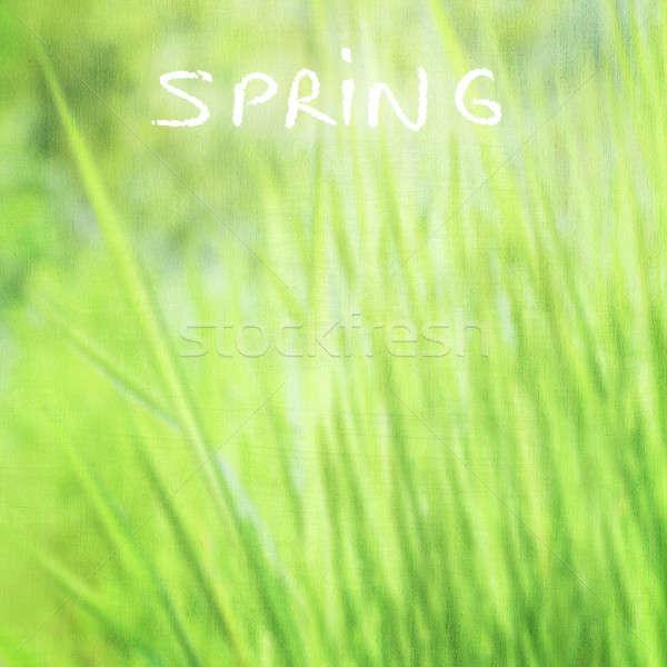 Green grass background Stock photo © Anna_Om
