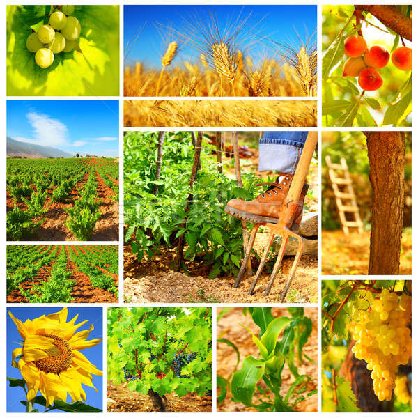 Harvest concept collage Stock photo © Anna_Om