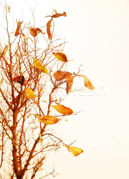 высушите листьев древесины аннотация Сток-фото © Anna_Om