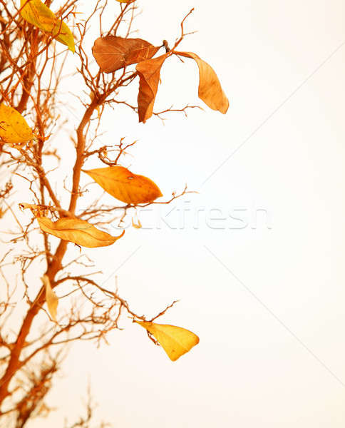 Stockfoto: Drogen · bladeren · hout · abstract