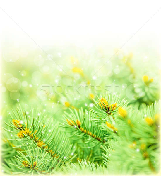 Green spruce border Stock photo © Anna_Om