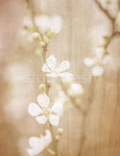 Vintage fine art floral background Stock photo © Anna_Om
