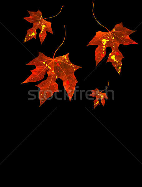 Autumnal leaves Stock photo © Anna_Om