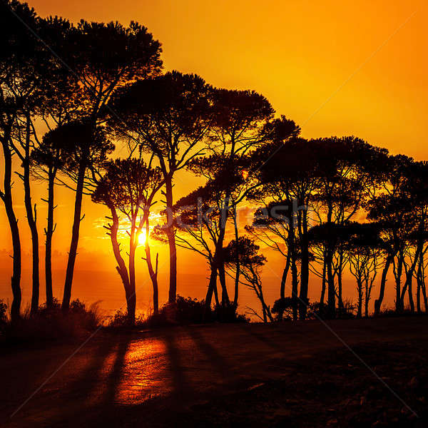 Stock photo: Beautiful trees on sunset