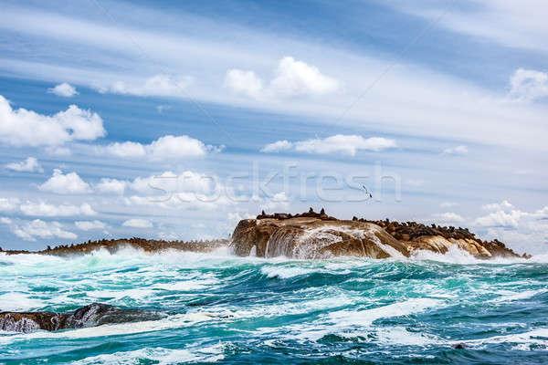 Wild seals colony on the stony island Stock photo © Anna_Om