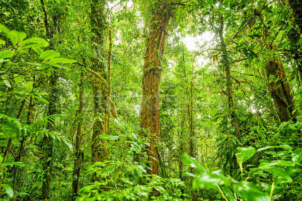 Rain forest green background Stock photo © Anna_Om
