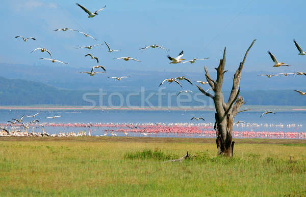 Stock photo: Dry tree