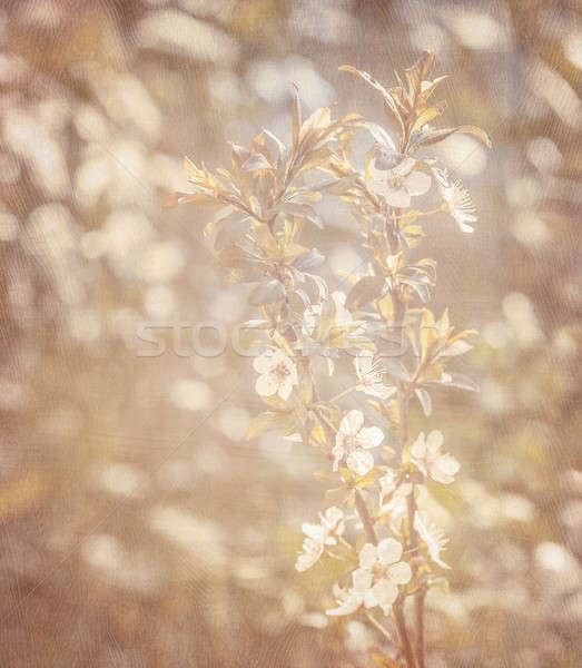 Spring blooming background Stock photo © Anna_Om