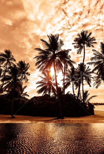 Stockfoto: Tropisch · strand · zonsondergang · mooie · kaart · silhouet · palmbomen