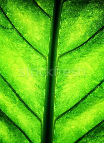 Yeşil yaprak taze sulu yeşillik soyut doğal Stok fotoğraf © Anna_Om