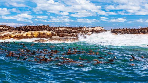 Vad dél-afrikai sok aranyos tenger szórakozás Stock fotó © Anna_Om