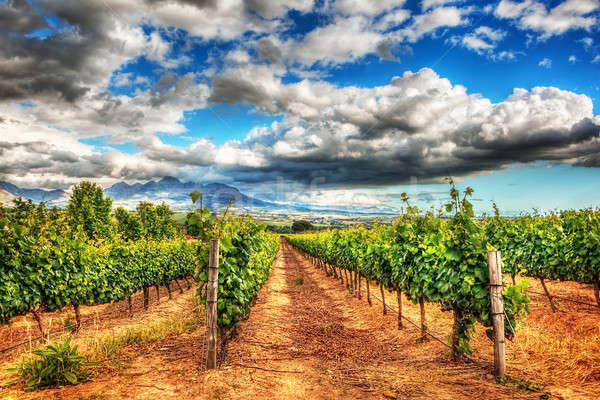 Güney afrika üzüm alanları manzara şaraphane bahçe Stok fotoğraf © Anna_Om