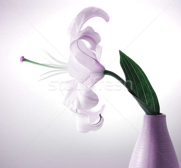 Stock photo: Beautiful violet lily