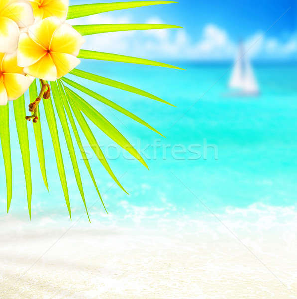 Tropical beach border Stock photo © Anna_Om