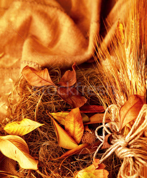 Grunge tarwe textuur bladeren najaar Stockfoto © Anna_Om