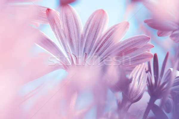 Dreamy floral background Stock photo © Anna_Om