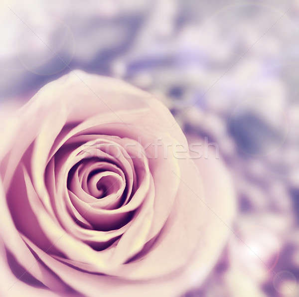Dreamy rose abstract background Stock photo © Anna_Om