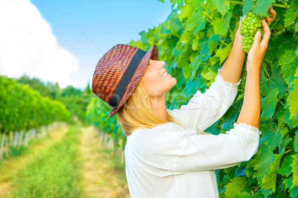 Woman pluck grape Stock photo © Anna_Om