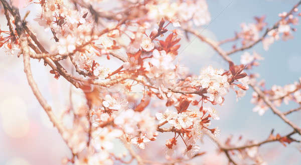 Stock photo: Beautiful flowers background