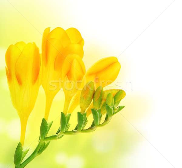 Friss tavaszi virágok virágcsokor zöld citromsárga bokeh Stock fotó © Anna_Om