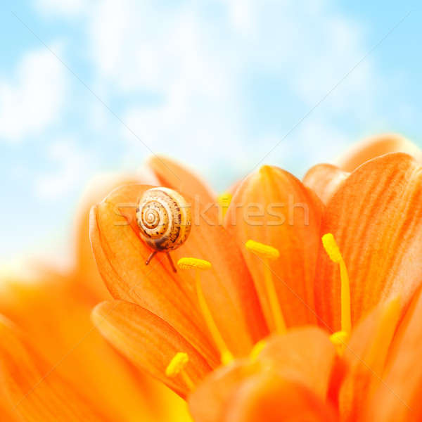 Crocus flower with snail Stock photo © Anna_Om