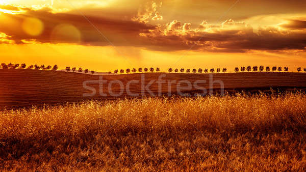 Yellow sunset over farmland Stock photo © Anna_Om