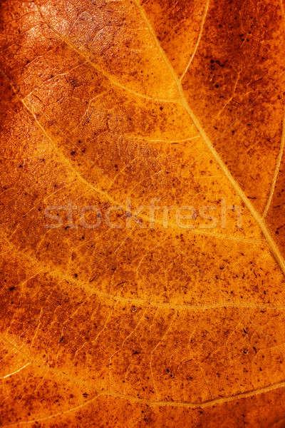 Arany száraz levél véna őszi lomb Stock fotó © Anna_Om
