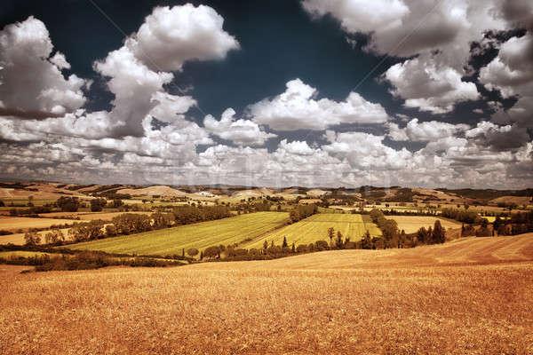 Stockfoto: Mooie · najaar · landschap · drogen · gouden · tarwe