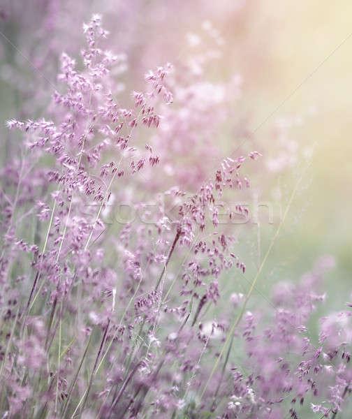 夢のような ピンク 花 フィールド 美しい 新鮮な ストックフォト © Anna_Om