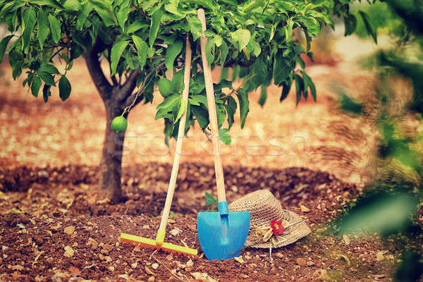 Photo stock: Fruits · jardin · travaux · nécessaire · outils · sol