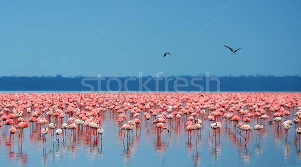 Flamingo África Quênia lago água paisagem Foto stock © Anna_Om