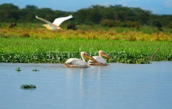 Сток-фото: белый · озеро · Африка · Кения · воды