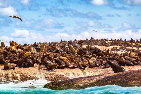пород морем побережье Cute красивой Сток-фото © Anna_Om