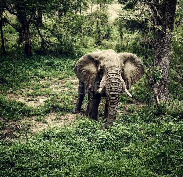слон свежие лесу фото огромный Сток-фото © Anna_Om