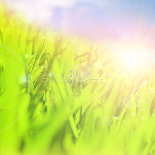 Stock fotó: Friss · zöld · mező · gyönyörű · zöld · fű · fényes