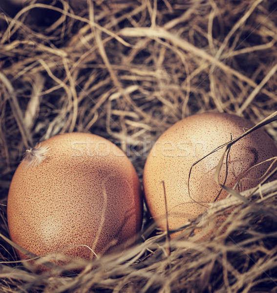 2 生 卵 巣 クローズアップ 写真 ストックフォト © Anna_Om
