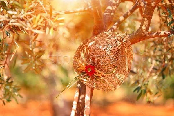 Foto stock: Relajación · jardín · sombrero · de · paja · olivo · brillante