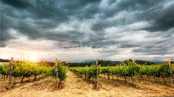 Belo vinha paisagem nublado céu agrícola Foto stock © Anna_Om