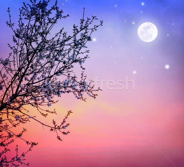 ツリー 夜空 美しい 暗い ストックフォト © Anna_Om